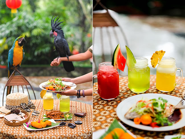 Taman Safari Eat with Birdies